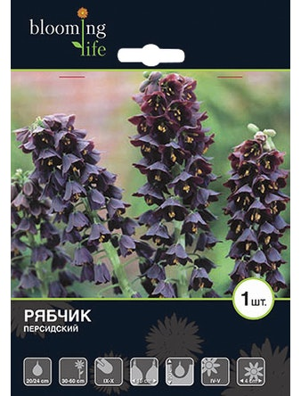 Луковицы Рябчик персидский