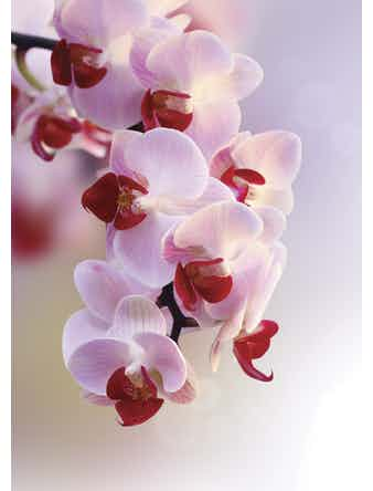 Фотообои DECOCODE ветка орхидеи 21-0007-FR винил на флизелине 2,8x2м