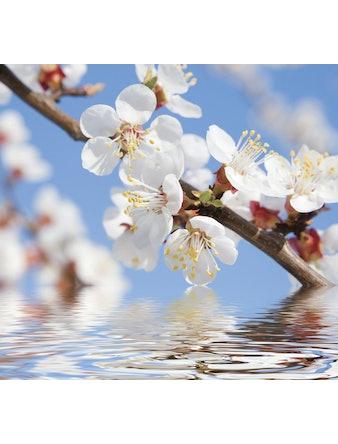 Фотообои DECOCODE белые цветы 31-0017-FL винил на флизелине 2,8x3м