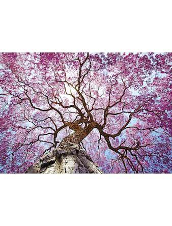Фотообои DECOCODE розовое дерево 41-0052-PR винил на флизелине 2,8x4м