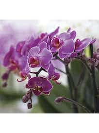 Фотообои DECOCODE прекрасные орхидеи 31-0066-FV винил на флизелине 2,8x3м