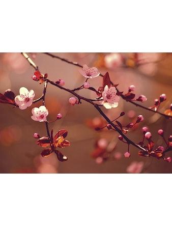 Фотообои DECOCODE сакура 41-0118-FR винил на флизелине 2,8x4м