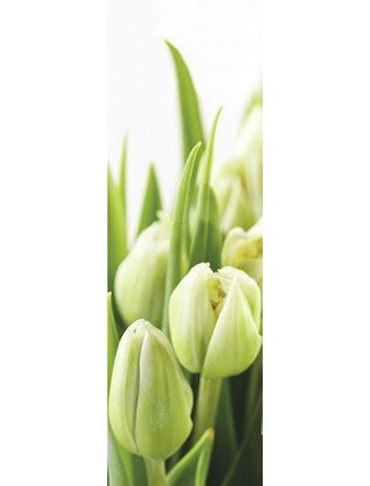 Фотообои DECOCODE белые тюльпаны 11-0160-FG винил на флизелине 7,8x1м