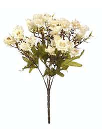 Хризантема, белая