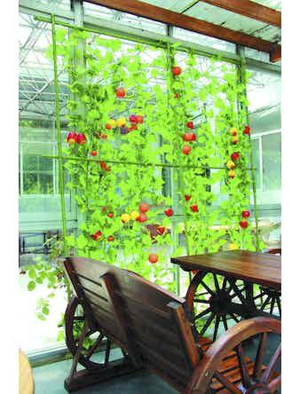 Опора для растений с сеткой Green Apple, 0,9 х 1,5 м