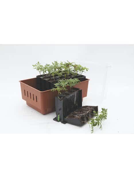 TAIMIALUSTA PLANTSTART ROOT-MASTER