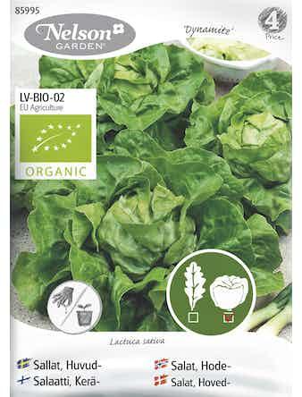 Frö Sallat Huvud Organic