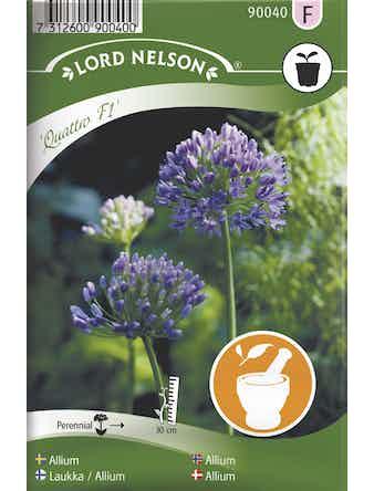 Allium Lord Nelson Quattro F1
