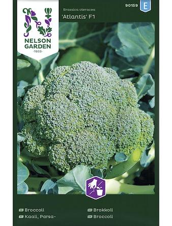 Broccoli Lord Nelson Premium Crop F1