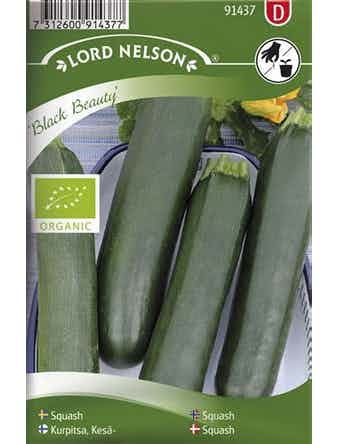Squash Lord Nelson Black Beauty Organic