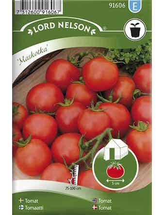 Tomat Lord Nelson Busk-Maskotka