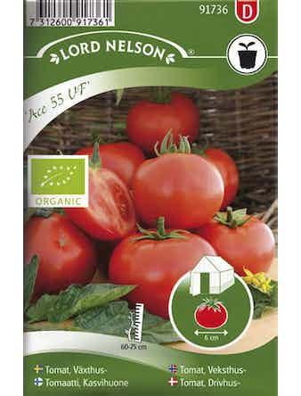 Tomat Lord Nelson Växthus-Ace 55 Vf, Organic