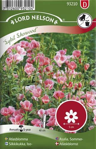 Atlasblomma Lord Nelson Sybil Sherwood Rosa