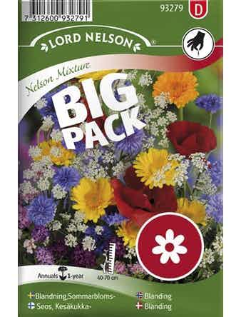 Sommarblomster Lord Nelson Blandade Färger Big Pack