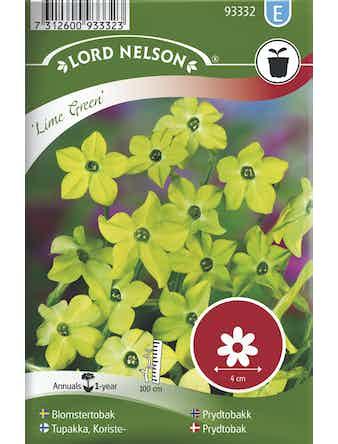 Blomstertobak Lord Nelson Lime Green