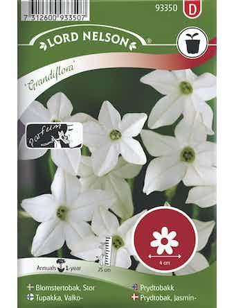 Blomstertobak Lord Nelson Stor Grandiflora Vit