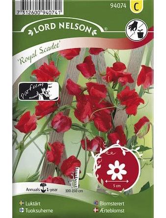 Luktärt Lord Nelson Royal Scarlet Röd