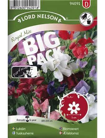 Luktärt Lord Nelson Royal Blandade Färger Big Pack