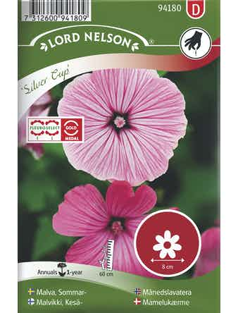 Malva Lord Nelson Sommar Silver Cup Rosa