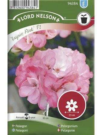 Pelargon Inspire Pink F1 Rosa