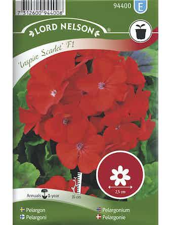 Pelargon Lord Nelson Inspire Scarlet F1 Röd