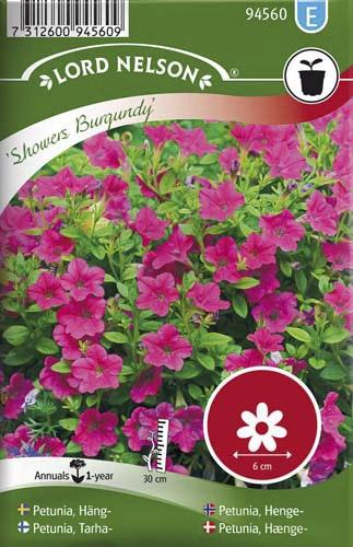 Petunia Lord Nelson Häng-Showers Burgundy