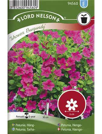 Petunia Lord Nelson Häng-Showers Burgundy