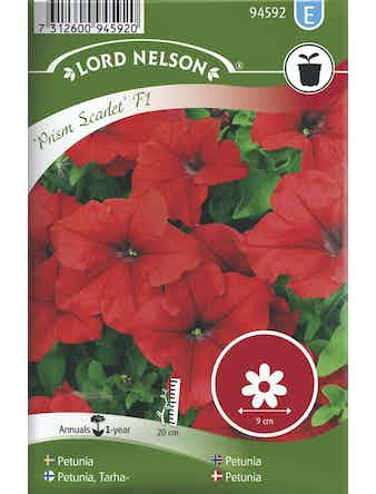 Petunia Lord Nelson Prism Scarlet F1