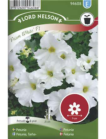 Petunia Lord Nelson Prism White F1