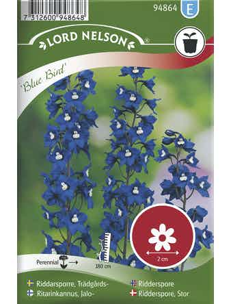 Riddarsporre Lord Nelson Trädgårds Blue Bird Blå