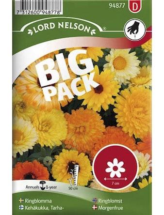 Ringblomma Blandade Färger Big Pack