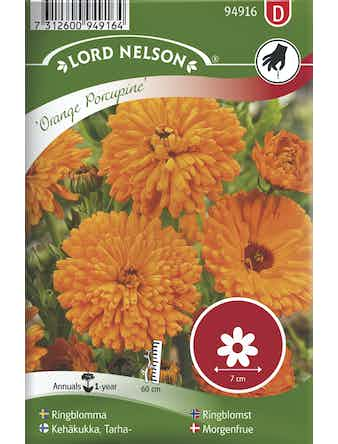 Ringblomma Lord Nelson Orange Porcupine