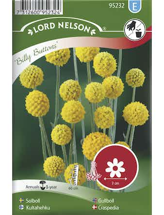 Solboll Lord Nelson Billy Buttons