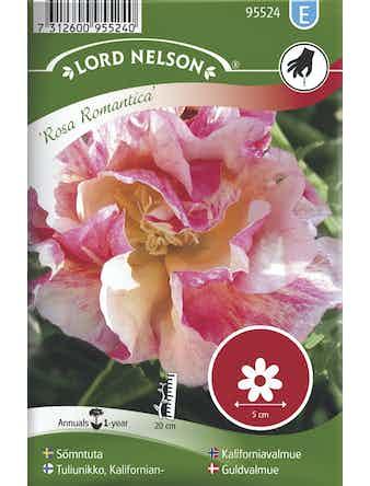 Sömntuta Lord Nelson Rosa Romantica