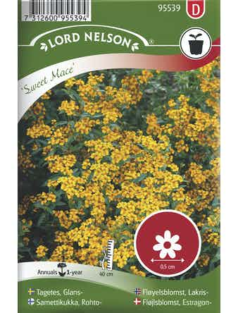 Tagetes Lord Nelson Glans Sweet Mace