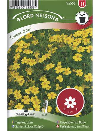 Tagetes Lord Nelson Liten Lemon Star
