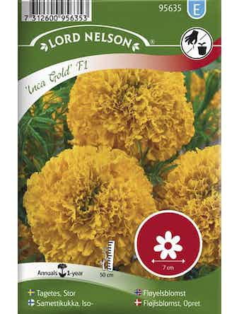 Tagetes Lord Nelson Stor-Inca Gold F1