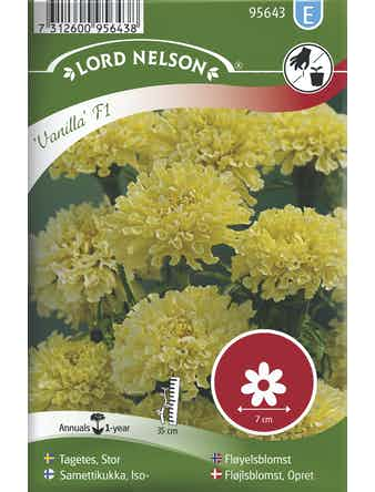 Tagetes Lord Nelson Stor Vanilla F1