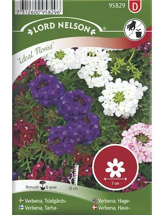 Verbena Lord Nelson Trädgårds Ideal Florist