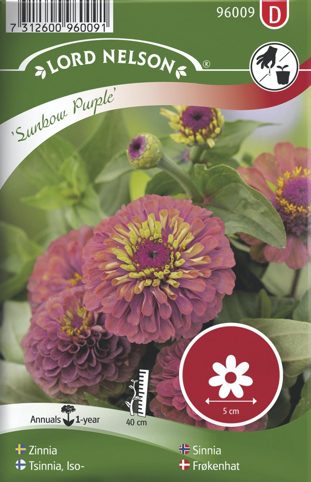 Zinnia Lord Nelson Sunbow Purple