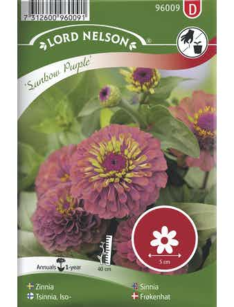 Zinnia Lord Nelson Sunbow Purple