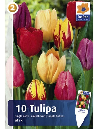 Луковицы Тюльпаны простые, 10 шт.