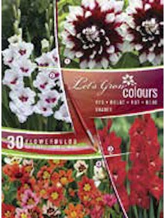 Коллекция луковичных Летc Гроу Красные оттенки