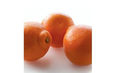 Tangold mandariini Espanja 1lk