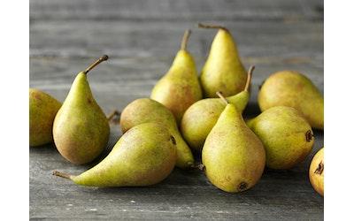 Päärynä Migo kg
