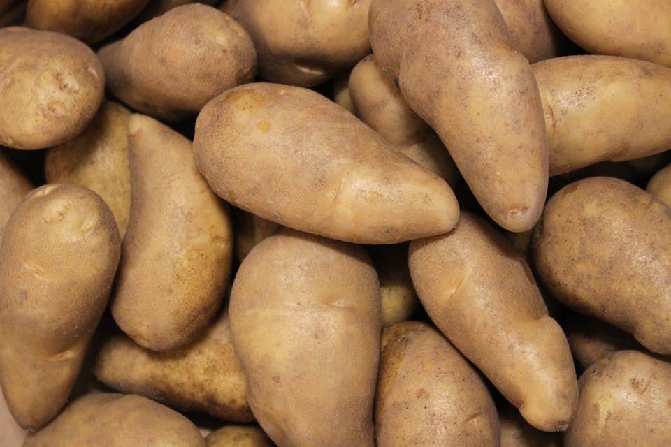 Puikula Almond potato from Finland.