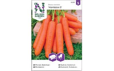 Siemen Porkkana Nantaise 2 kylvönauha
