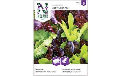Siemen Salaatti BLeaf kylvön