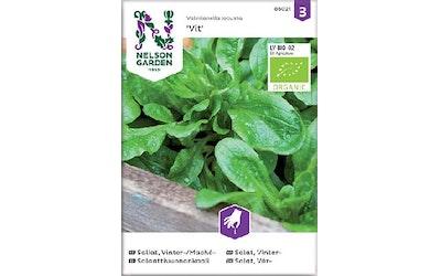 Siemen Salaattivuonank luomu