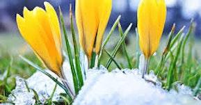 Kevättä kotiin - kokoelma